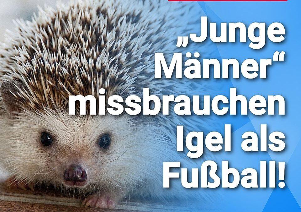 """Igel-Party """"Gruppe junger Männer"""" missbraucht Igel als Fußball"""